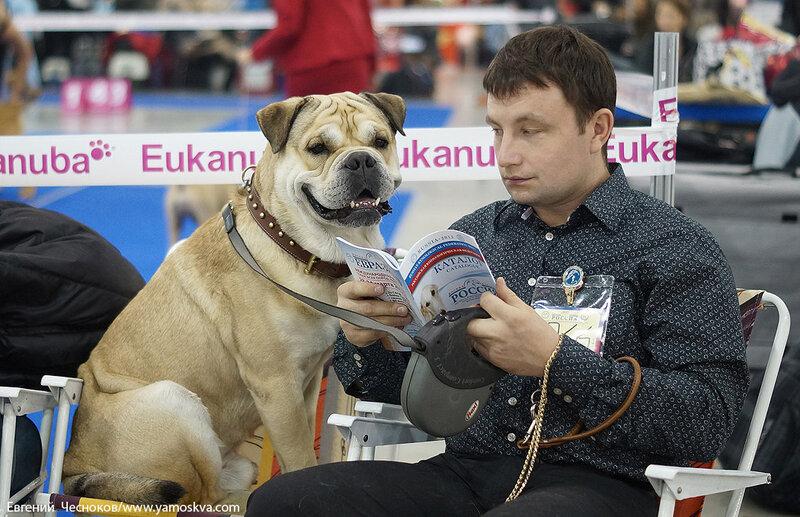 Осень. Выставка собак Россия. 03.11.12.09...jpg