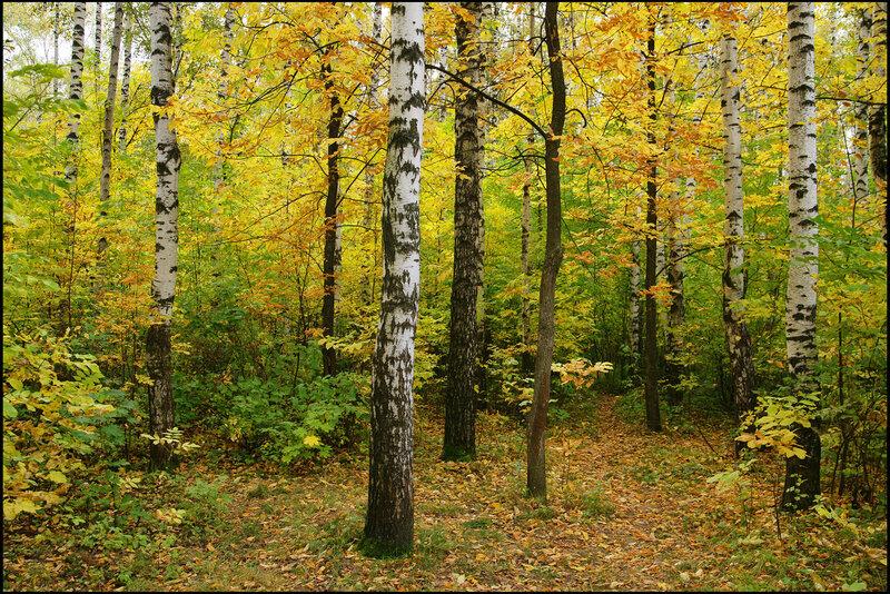 Осеннее позолочение