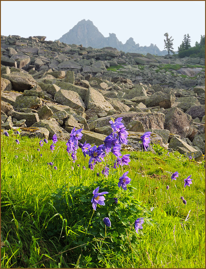 Цветы Ергаков