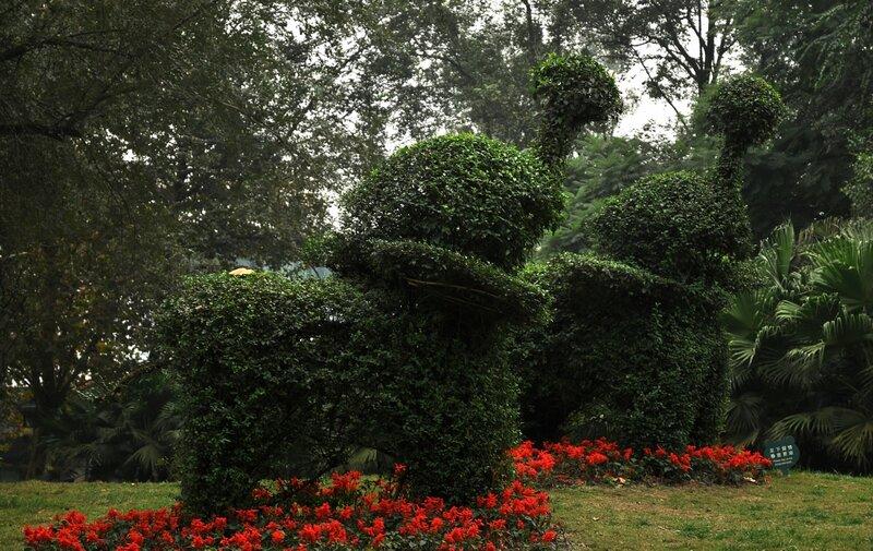 Слоновые кусты