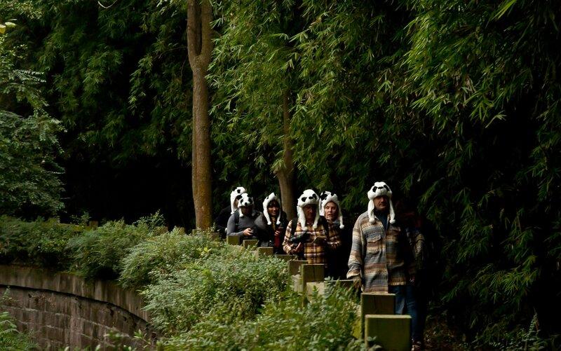 Туристы-панды