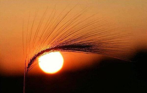 Взгляд заходящего солнца