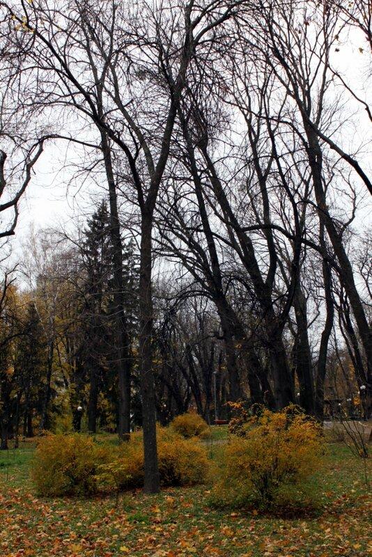 Деревья Мариинского парка