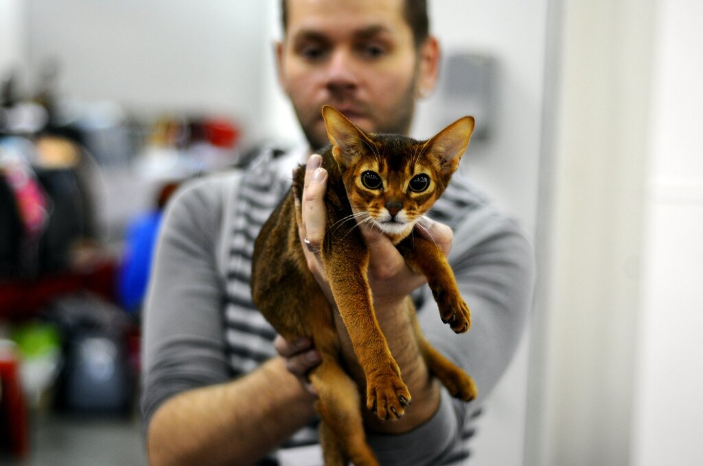 Международная выставка кошек «Гран-При ROYAL CANIN»
