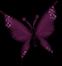 Papillons redimensionnes_2.png