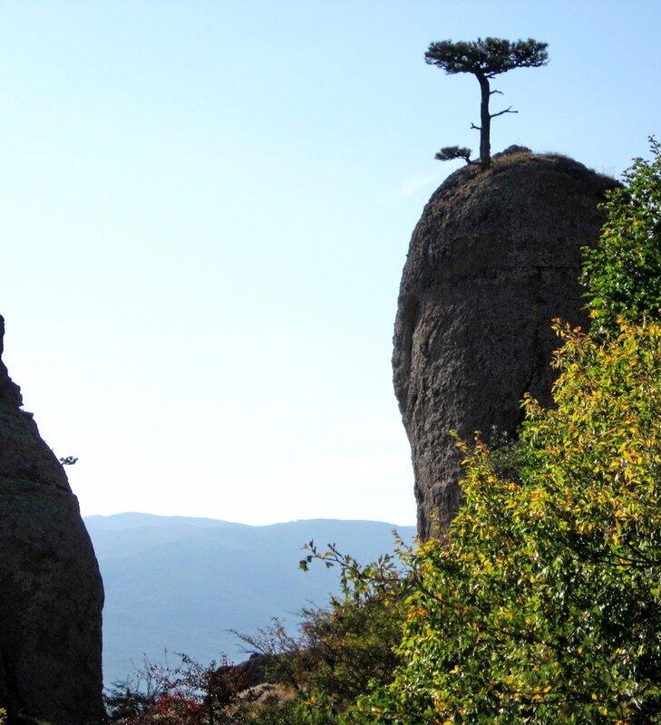 Одинокое дерево на скале
