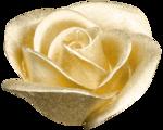 feli-acig-golden rose.png
