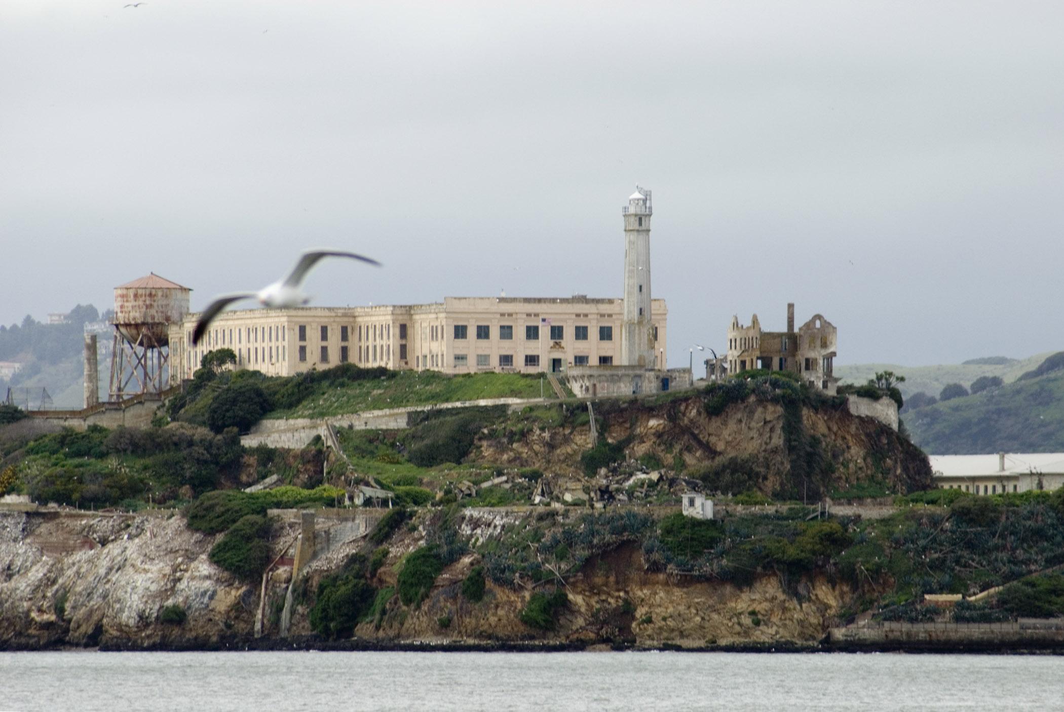 alcatraz flower bird island  WordReference Forums