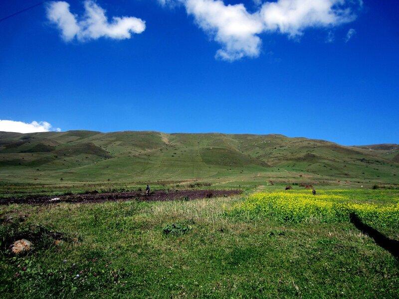 село Фиолетово, поле
