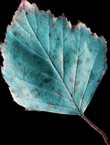 «Autumn Glow» 0_9807a_447b366f_L