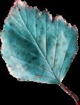 emeto_autumn glow_leaf 2.png