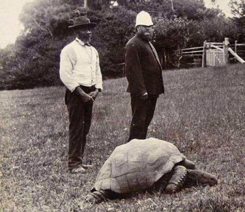 4. Это Джонатан, 182-летняя гигантская черепаха с острова Св. Елены. «Он практически слепой, утратил