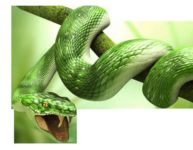 Serpent - Porno RueNucom - intermet56ru