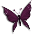Papillons redimensionnes.png