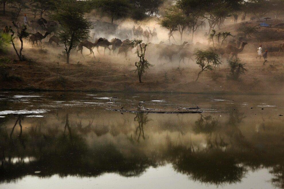 Вид со стороны озера на перегон верблюдов.