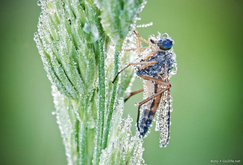 Go2life.net • Фантастически красивые насекомые в каплях росы
