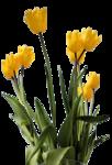 цветы (39).png