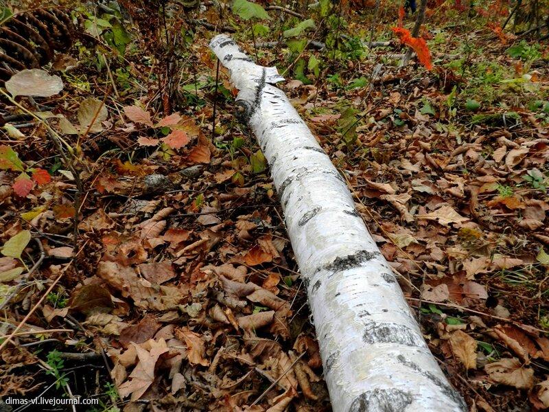 Полуостров Де-Фриз. Осенний лес. 20-октября-2012г