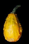 natali_halloween_pumpkin3.png
