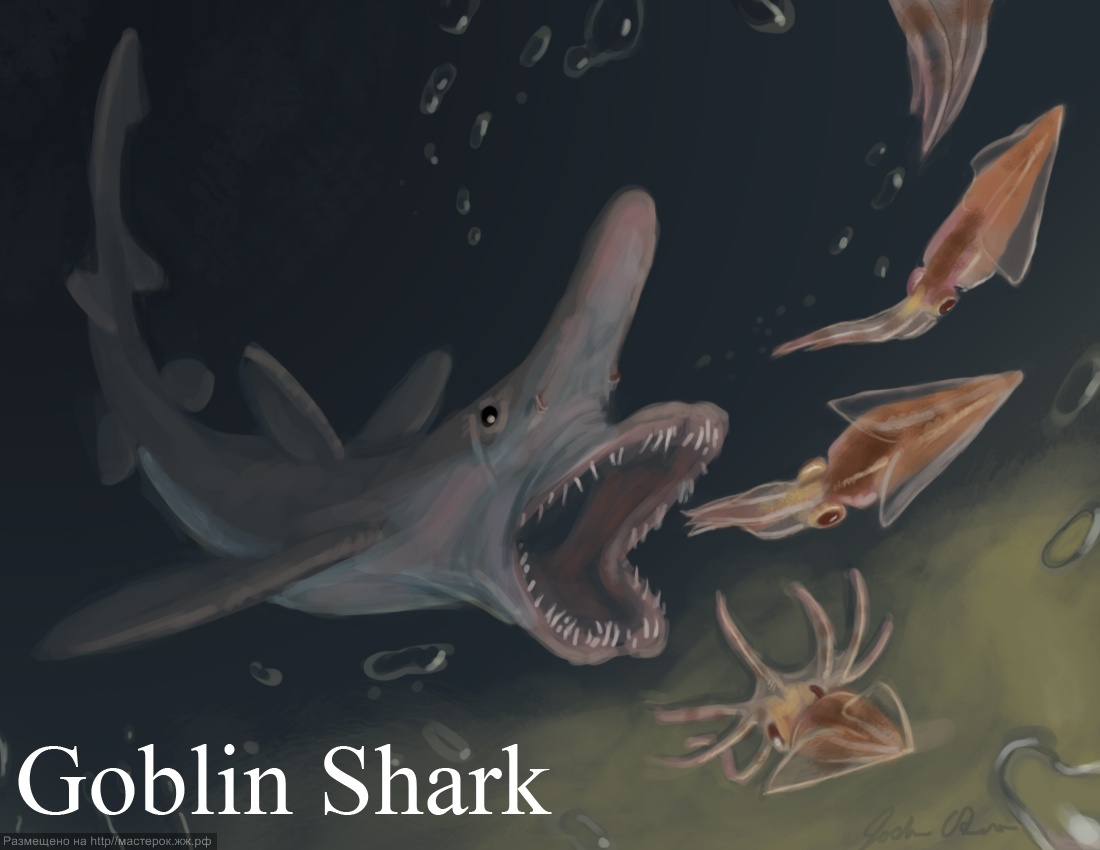 Goblin shark attack