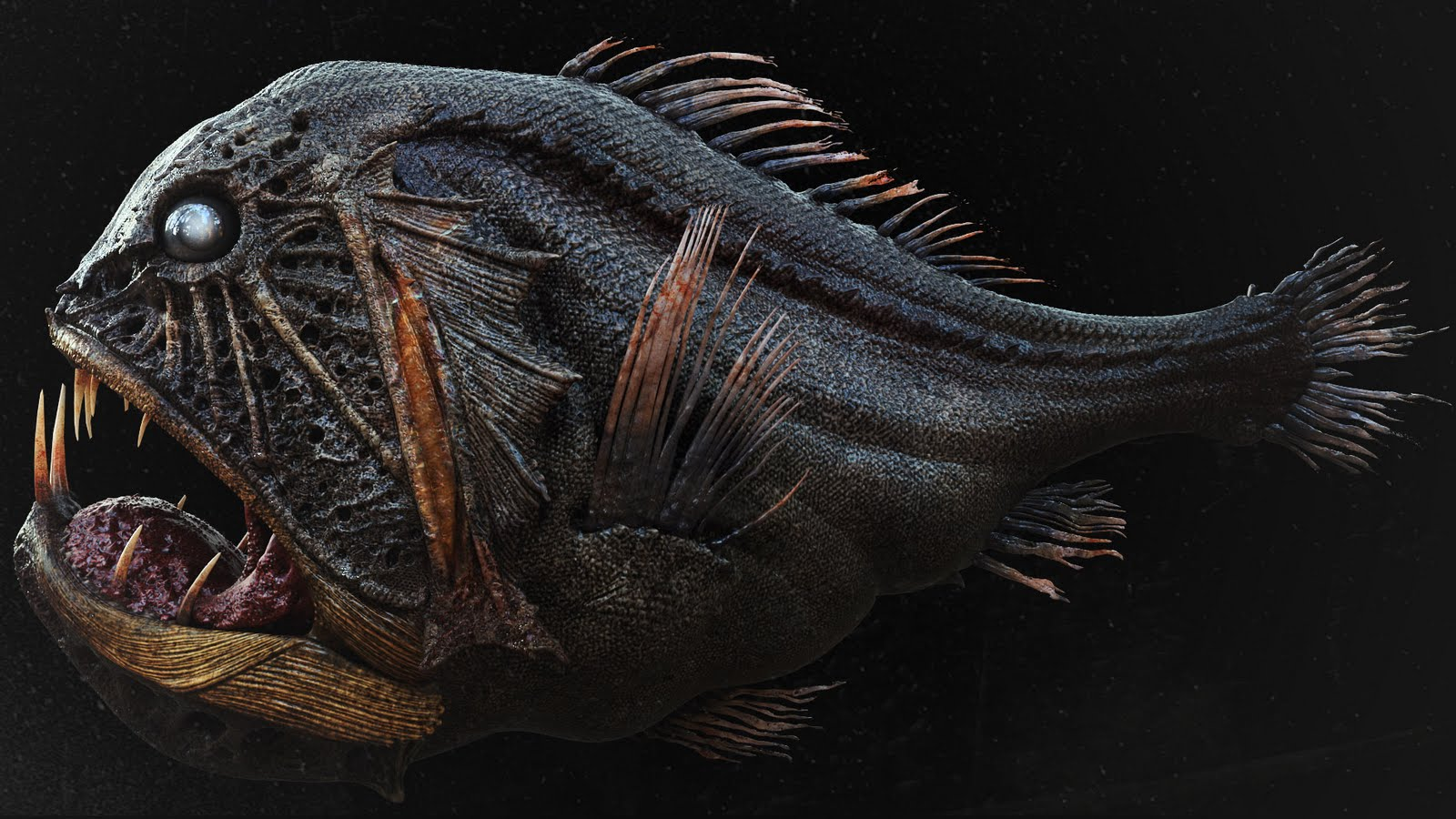 Картинки хищных рыб и животных