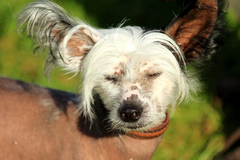 Собачий портрет - Страница 19 0_a0612_27794d01_XL