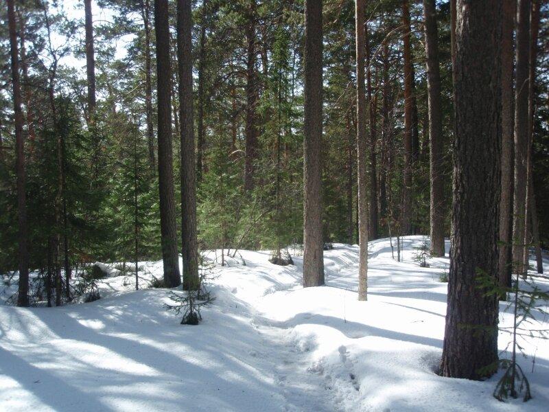 Дорожка по лесу