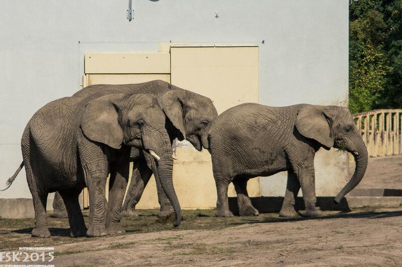 warshaw_zoo-77.jpg