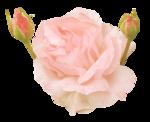 «victorian rose» 0_94a8c_727ebb0e_S