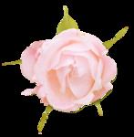 «victorian rose» 0_94a91_f4c0c03f_S