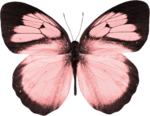 jss_bluejeans_butterfly pink 4.png