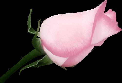 «sweet romance» 0_95584_4039b5e9_L