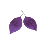 MyPassion_ViolettDesign_el (30).png