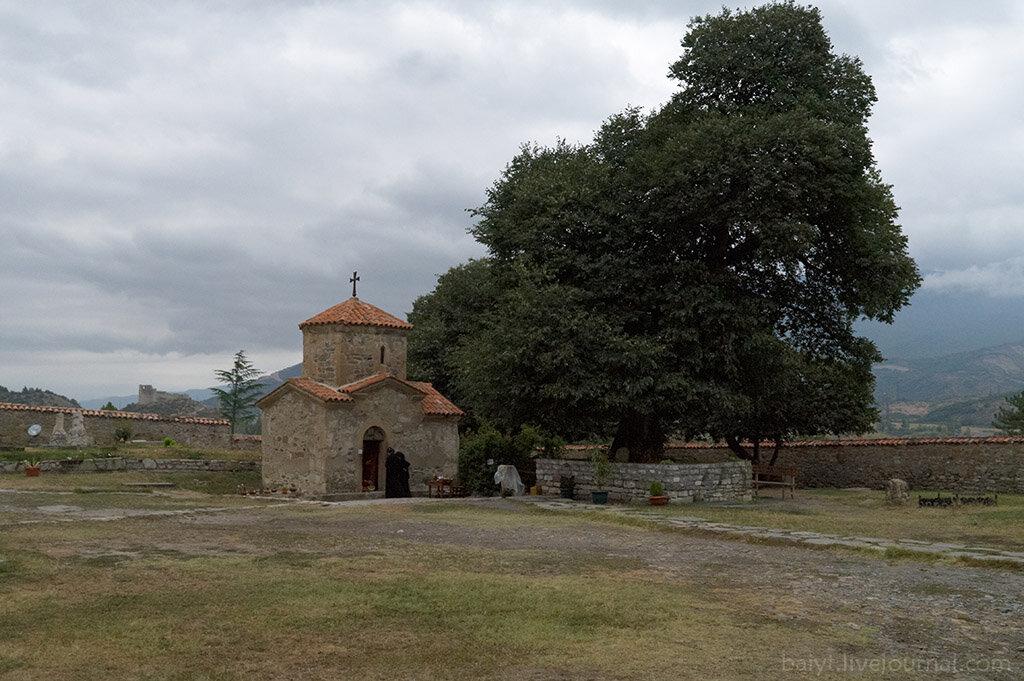 Церковь и дерево святой Нино в монастыре Самтавро, Мцхета