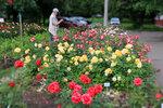 Приглашаем на цветение роз 2015!