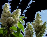 цветы (29).png