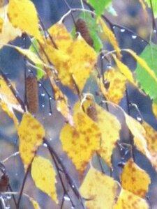 Осенний фотоконкурс 0_907eb_777867f6_M