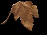 natali_halloween_leaf11.png