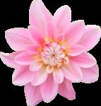 DBB_gardenflowers_el03.png