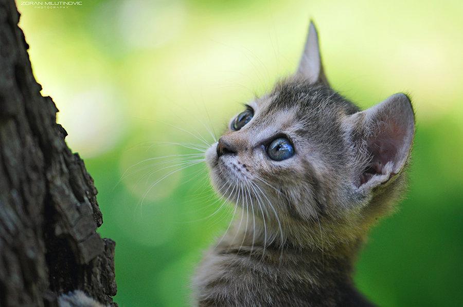 Коты. Фотограф Zoran Milutinovic