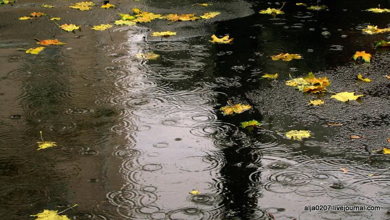 Картинки осенних дождей