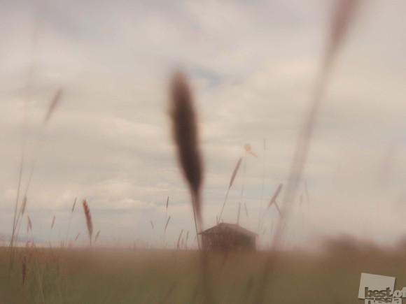 Вазелиновое поле