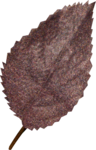 1 (36).png