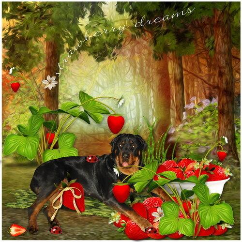 «Strawberry Dreams»  0_952c2_dd612af7_L