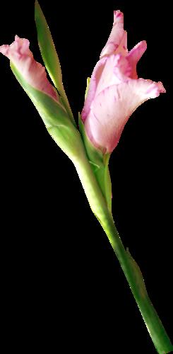 «sweet romance» 0_955d2_7074ba34_L