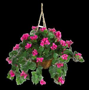 DBK_PLANTS_035.png