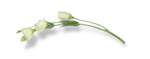 natali_design_love_flower12-sh.png