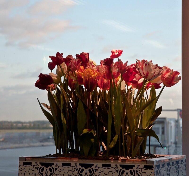 Тюльпаны а аэропорту