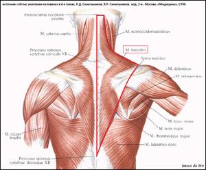 Боль в поперечной области спины