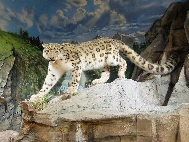 Абакан - Краеведческий музей